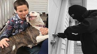 This Boy Says A Burglar Broke In And Pursued Him Upstairs, But Then His Pit Bull Sprang Into Attack