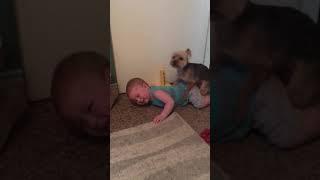 Girl dog humps baby boy