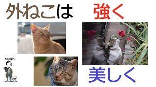 外ねこ写真集 - Cats photo collection