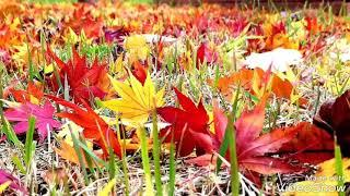 Photo collection of autumn leaves(2018가을단풍사진모음영상)