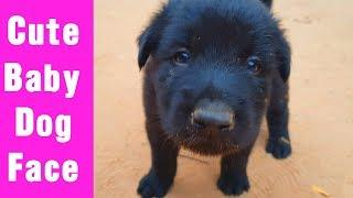 My Cute Puppies Baby - Cute Baby Puppy