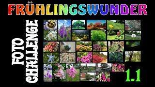 Die ersten Bilder (Challenge 1.1 - ERGÄNZUNG) ❦ Foto-Challenge ❦ PixelDreamer Nimmermehr