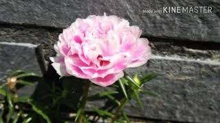 ????????Photo collection of flower????????????????