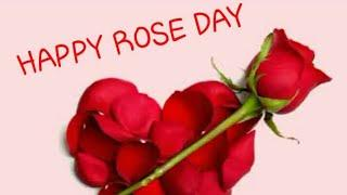 Happy Rose Day || New whatsapp status for rose day Boy and Girl Status