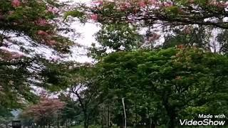 Beautiful Goalpara