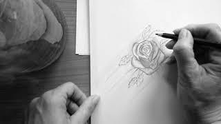 Bleistiftzeichnung * Rose* Freehand * Speed drawing