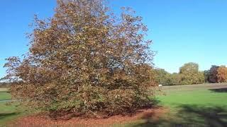 Autumn afternoon walk round the Audley End estate