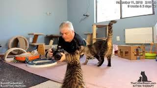 Fantastical Kittens - Afternoon Photos 2018-11-11