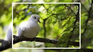 Photo Collection l Wildlife l Photography l Slide Show