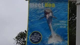 SeaWorld San Diego Dolphin Stadium Amphitheater Photo Collection 19-23 June 2018