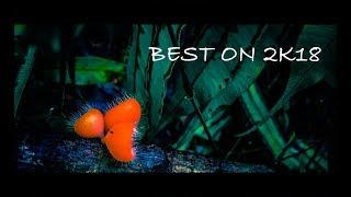 Best Photo Collection 2018